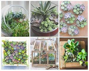 Plantes Grasses Intérieur : plantes grasses d appartement digpres ~ Melissatoandfro.com Idées de Décoration