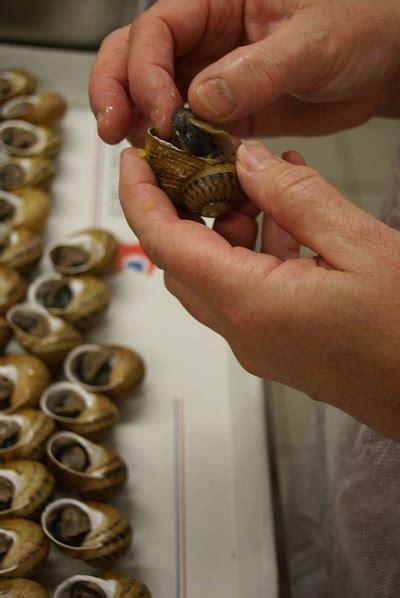 comment cuisiner les escargots comment sont fabriqués nos escargots l 39 escargot des