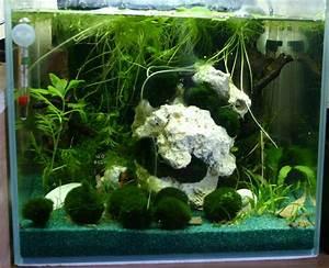 Aquarium Bodengrund Berechnen : sakura orange garnelen aquarium ~ Themetempest.com Abrechnung