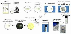 Cryopreservation Procedure For The Droplet Vitrification