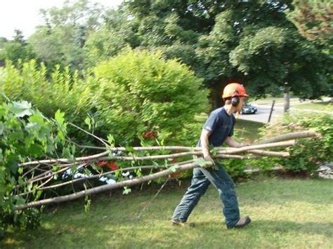 cedar hedges tree branches  stump removal