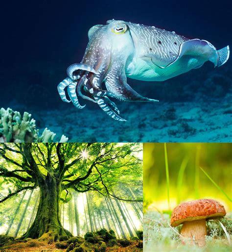 Sistematika živoga svijeta - Biologija 2