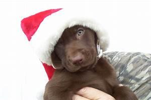blog de rigueur: Puppy Pictures, plus an ugly picture blog
