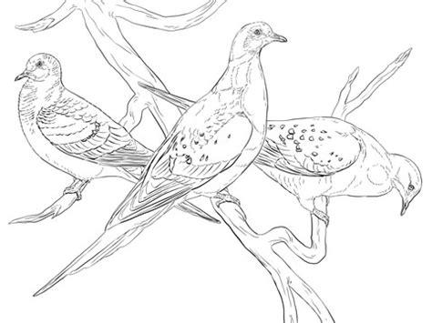 passenger pigeons coloring page supercoloringcom