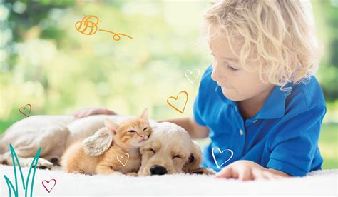 The data shows less than 2% of insured dog parents typically submit claims totaling over $10,000 in a policy year and less than 3% of insured cat parents. MiPet Cover_WalkawayCover Free Pet Insurance | MiPet Cover
