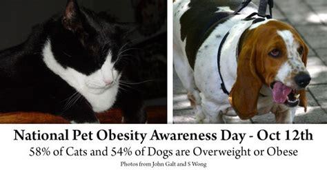 days national pet obesity awareness day