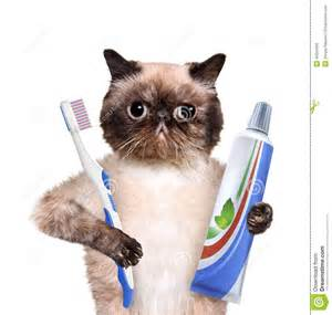 brushing cats teeth dogs and cats brushing teeth breeds picture