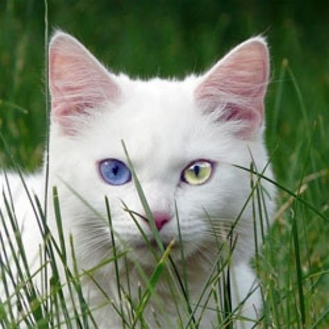 white cat names unusual and unique names for white cats pethelpful