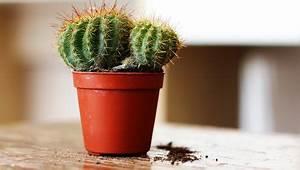 Comment Entretenir Un Cactus : astuces pour entretenir un cactus ~ Nature-et-papiers.com Idées de Décoration