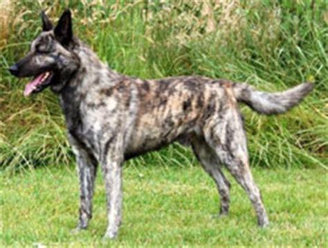 ras tweede hond hondenforum