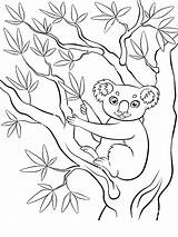 Koala Coloring Pages Print Animal Animals Recommended sketch template