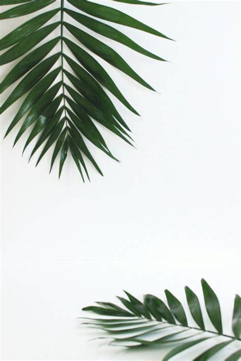 terkeren  wallpaper daun aesthetic rona wallpaper