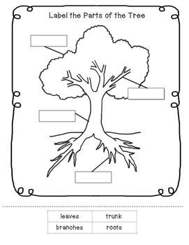 trees worksheets kindergarten parts of a tree worksheet little learning tpt store plant lessons trees for kids tree