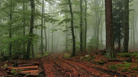 aesthetic forest wallpaper desktop