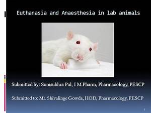 Euthanasia And Anaesthesia In Laboratory Animals