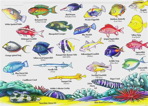 20 Things You Didn't Know About Fish Animals Names Fish