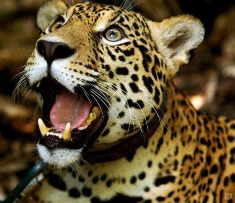 nursery  wild animals  bolivia   page