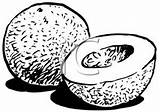 Cantaloupe Clipart Clip Pages Halved Whole Clipartreview sketch template