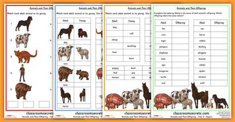 year 2 science animals and their worksheets