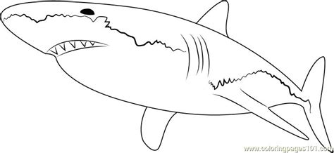 Baby Shark Coloring Pages At Getcolorings.com
