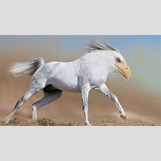 26 Photoshopped Animal Hybrids That Are Straight Out Of A Movie (photos