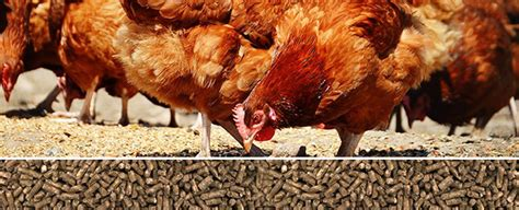 poultry feed machinery distributor  china  cost