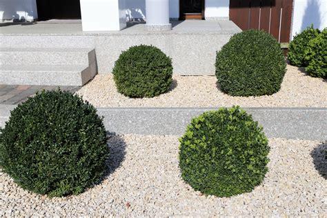 vorgarten gestalten pflegeleicht vorgarten einfach gestalten 187 die besten ideen f 252 r pflegeleichte vorg 228 rten