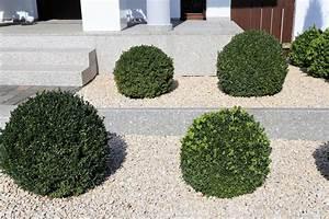 Immergrüne Pflanzen Für Kiesbeet : kiesbeet im vorgarten anlegen sch ne ideen zum nachahmen ~ A.2002-acura-tl-radio.info Haus und Dekorationen