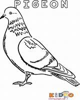 Colouring Pigeon Coloring Printable Baubles Dog Kidocoloringpages sketch template