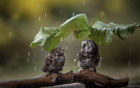 wallpapers owl rain wildlife funny birds