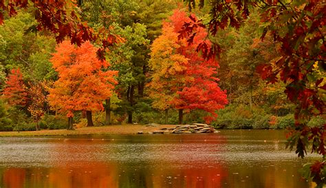 Iphone 11 Wallpaper Hd Autumn by Reflections Of Autumn Trees Nature Fall Hd Wallpaper