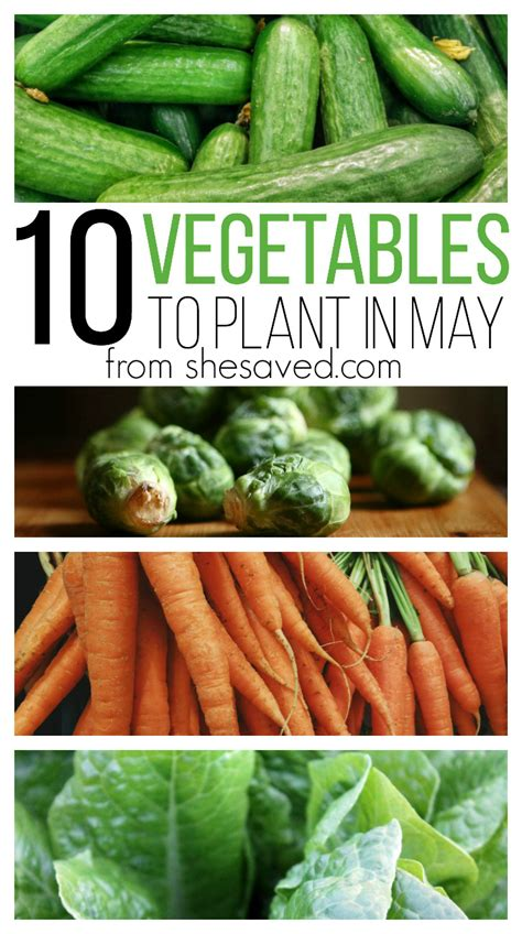 How To Plant A Vegetable Garden In Your Backyard by 10 Vegetables To Plant In May Shesaved 174