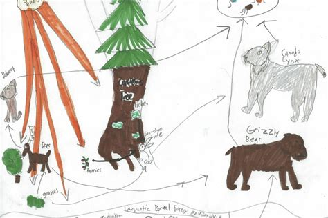 boreal cuisine boreal forest food web images