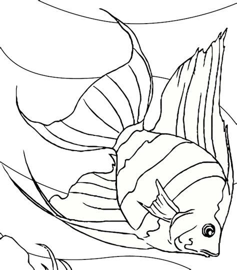 Coloring Ikan by Gambar Mewarnai Hitam Putih Ikan Hias Air Tawar Untuk Anak