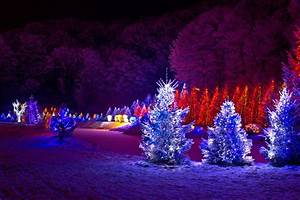 outdoor christmas trees With lighting outdoor trees for xmas