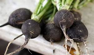 Plante Detoxifiante : le radis noir meilleur ami de votre foie mais pas ~ Melissatoandfro.com Idées de Décoration