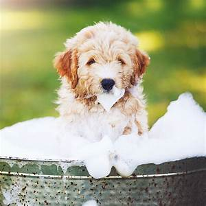 3 Signs Youre Not Washing Your Dog Correctly