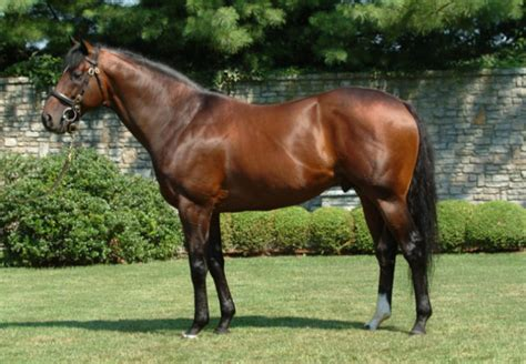 pegasus fusaichi horse expensive most horses coolmore alpha thoroughbred omega equine ever goat racing personal farms night stallion breeding eventing