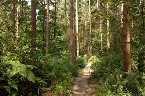 Hemsted Forest   Forestry England