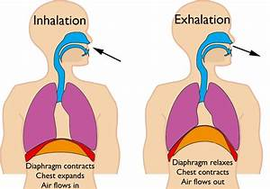 Respiration Is The Process In Which The Energy From
