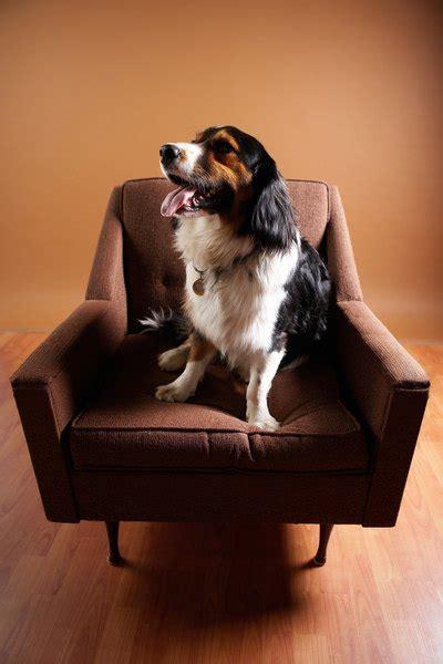 dogs    bathroom   furniture