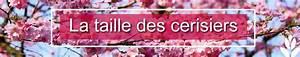Taille De Cerisier : 3 fa ons de tailler les cerisiers les conseils pour ~ Melissatoandfro.com Idées de Décoration