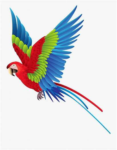 Clipart Flying Birds Bird Colorful Parrot Fly