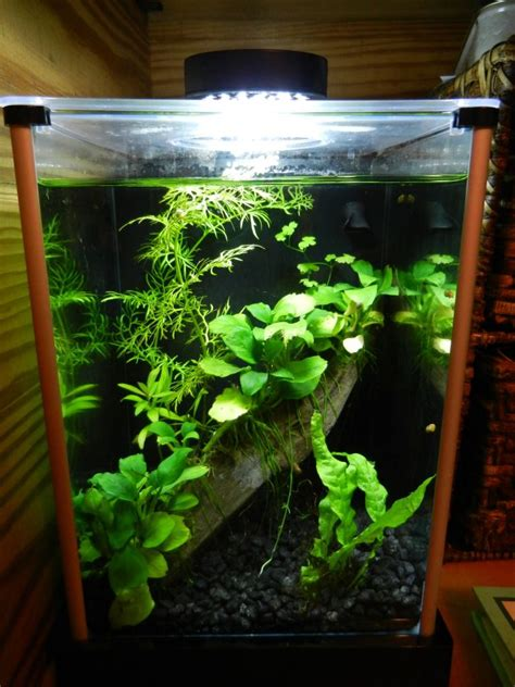 Betta Aquascape by Planted 2g Fluval Spec W Dario Dario Something Fishy