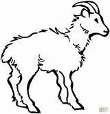 Coloring Goat Pages Domestic Printables Printable Goats Billy Drawing Results Popular sketch template