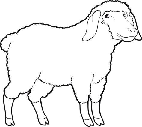 site cuisine facile coloriage un mouton dory fr coloriages