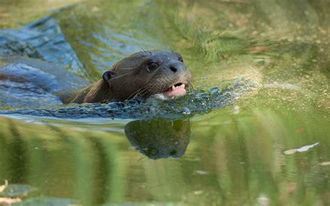 bureau vall馥 la rochelle aquarium argeles gazost 28 images a la d 233 couverte des parcs animaliers de la vall 233 e d argel 232 s gazost office de tourisme vall 233 e