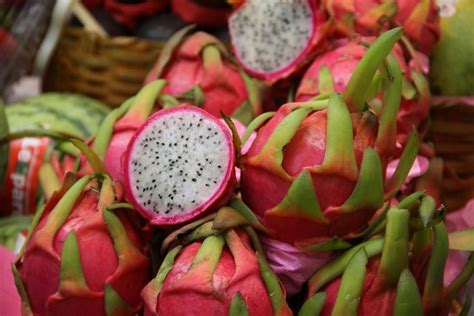 pitaya flickr photo sharing