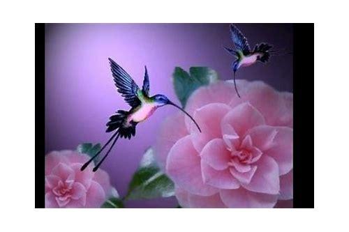 baixar gratis de flor rosa eo beija