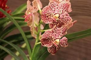 Dünger Für Orchideen : orchideen d ngen die besten hausmittel und orchideend nger ~ Eleganceandgraceweddings.com Haus und Dekorationen